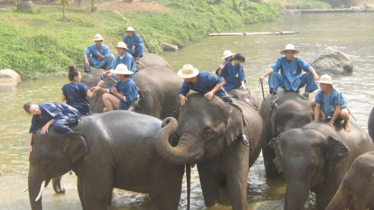 Elephant Conservation Center and Elephant hospital in Lampang