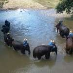 wilai_private_tour_guide_5_gallery_chiang_mai_thailand